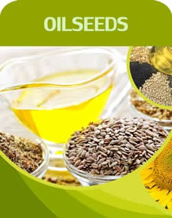 oil seed product Ethiopian Exporters Gatefarms international trade plc